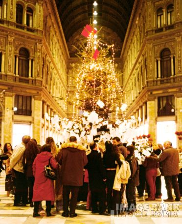 Christmas Trees In Italy