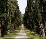 1-cypress alley_2